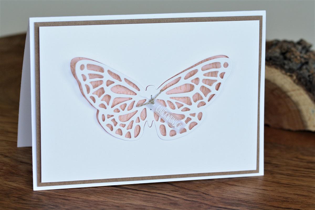 Neuer Schmetterling
